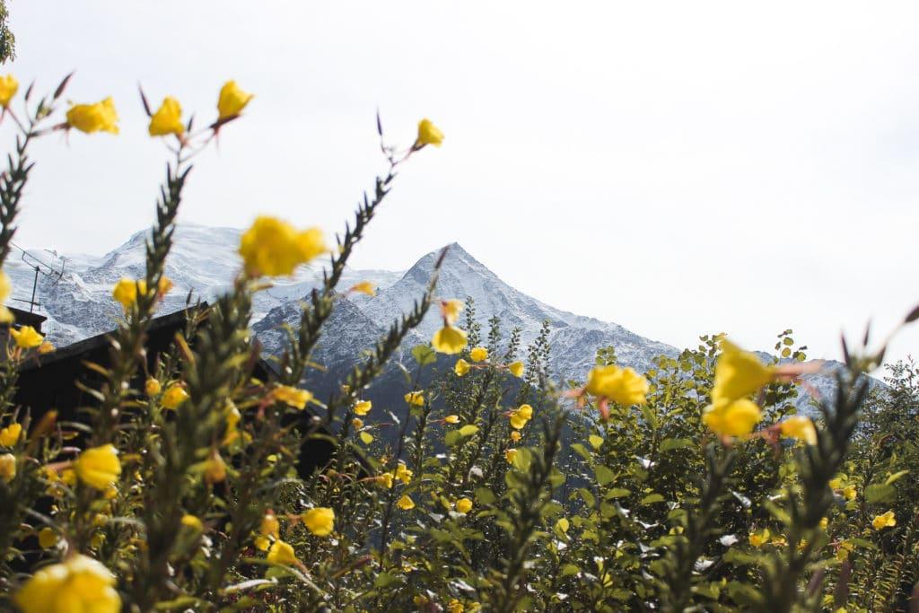 Découverte d'un paysage de montagne au printemps à Chamonix. Montagne avec sommets enneigés et fleurs jaunes.