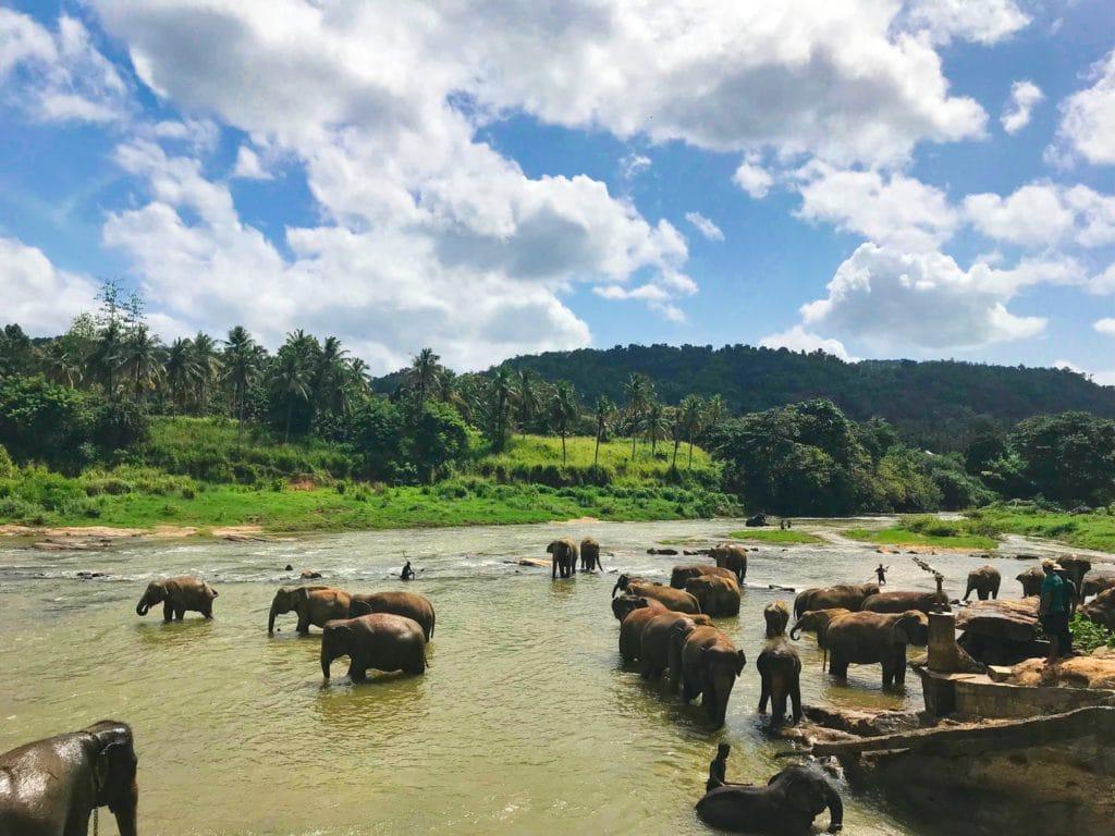 Parc National Yala au Sri Lanka et éléphants se baignant dans une rivière