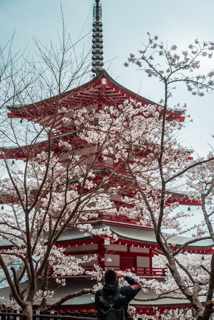 Pagode Chureito avec cerisiers japon