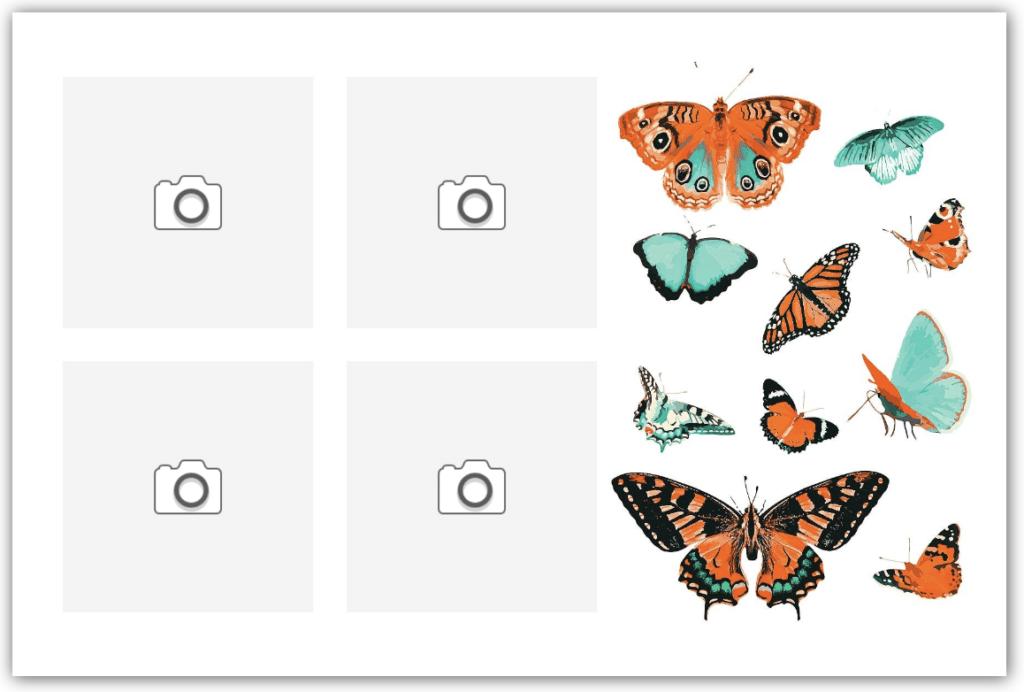 Carte papillons