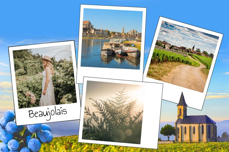 Carte postale des vignes de Bourgogne