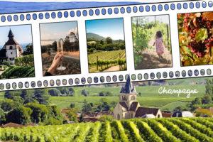 Champs de vigne en Champagne Grand Est
