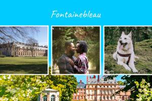 Carte postale de la foret de Fontainebleau