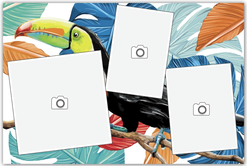Carte animaux toucan