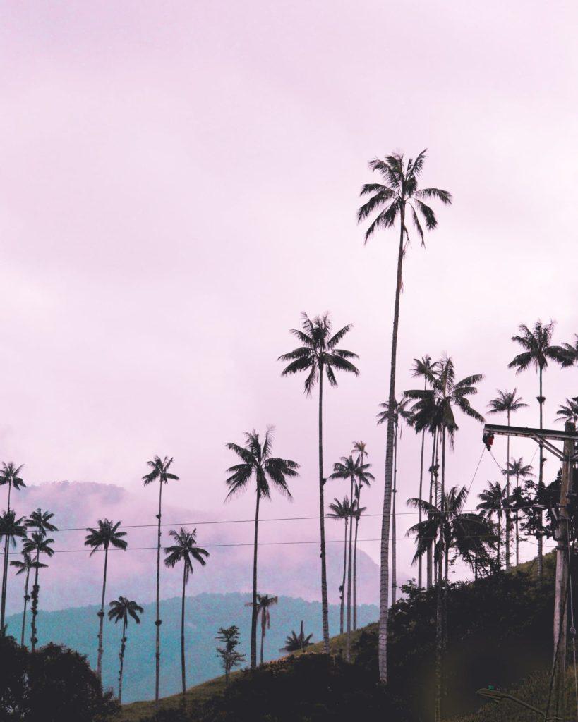 La vallée de Cocora en Colombie par LucieCMP