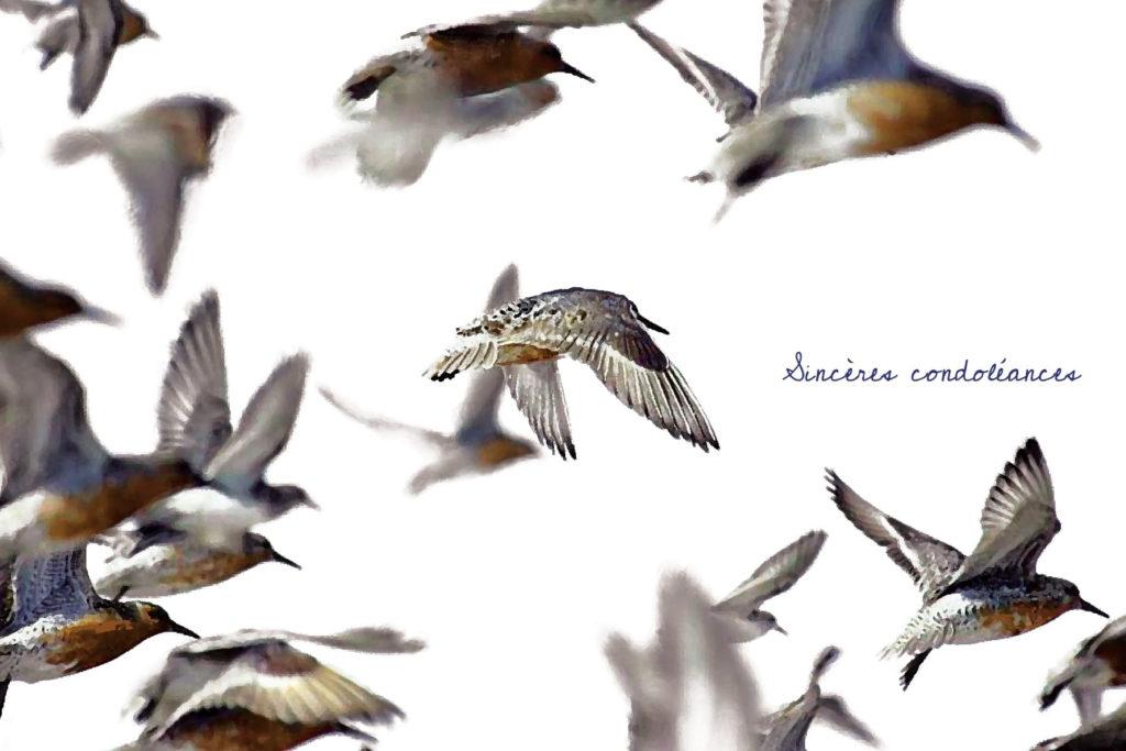 nos tendres pensees carte condoleances oiseaux