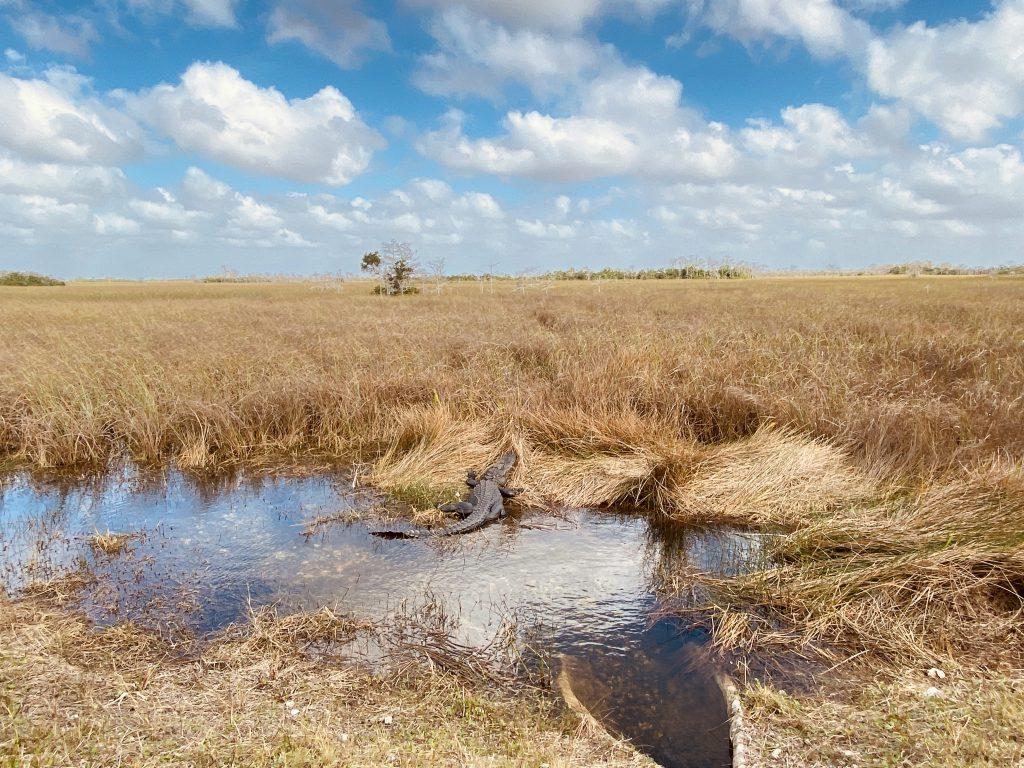 Eau et marecage aux Everglades en Floride