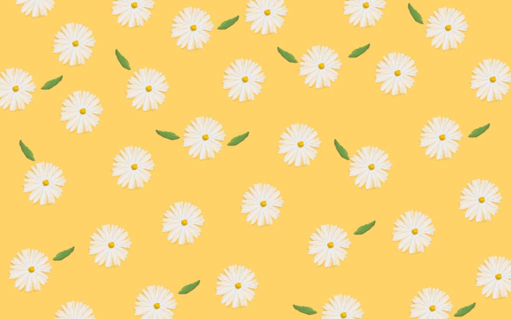 Fond ecran jaune avec marguerites