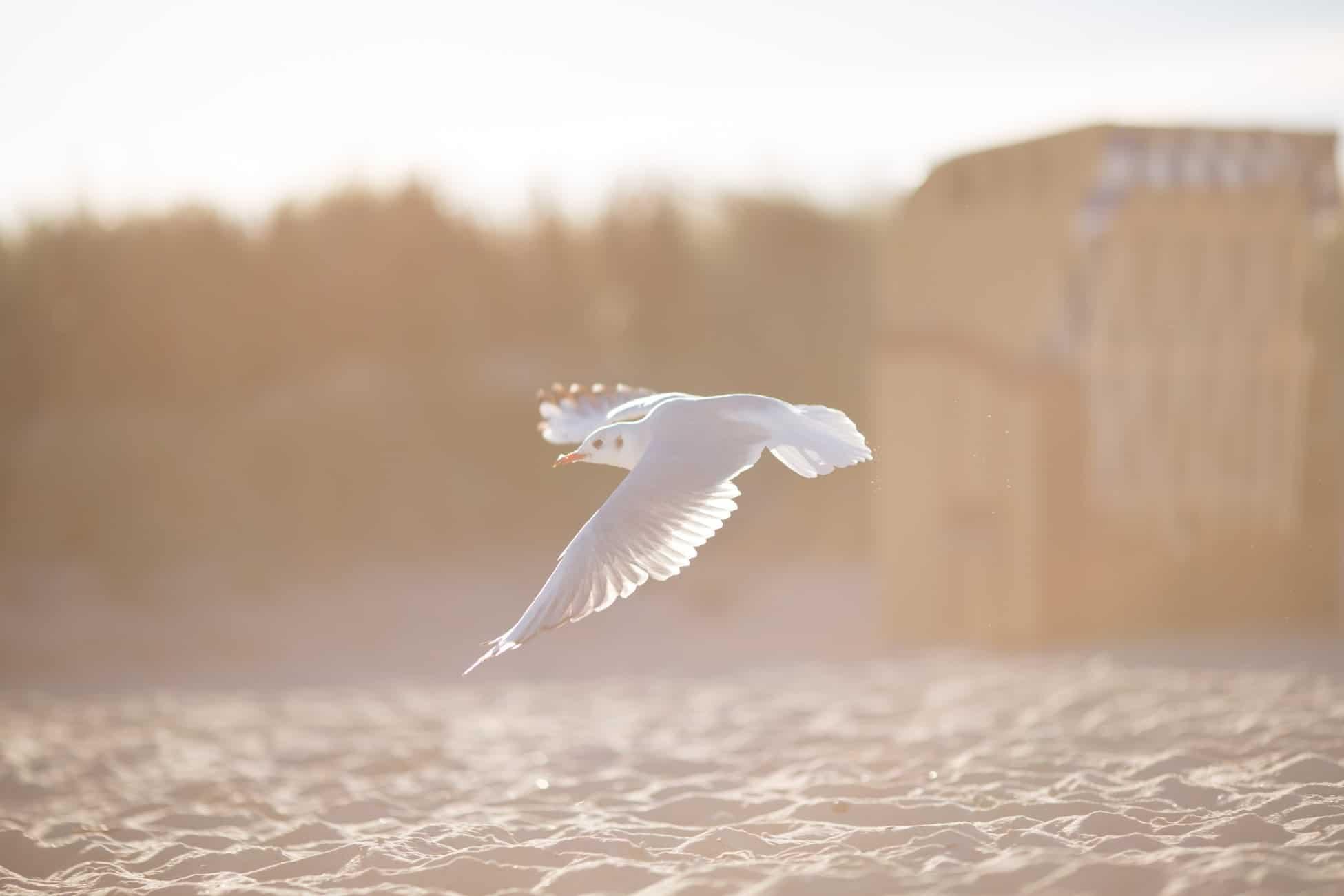 Goéland qui survole la plage pendant les vacances d'été