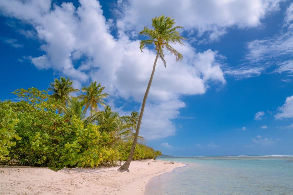 Plage paradisiaque en Guadeloupe