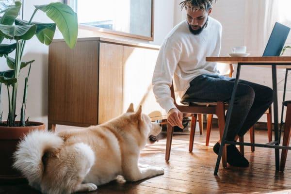 bonnes raisons teletravail avec chien
