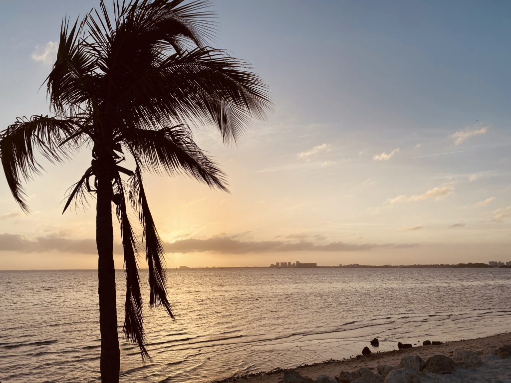 Palmier a Key Biscayne Miami Floride