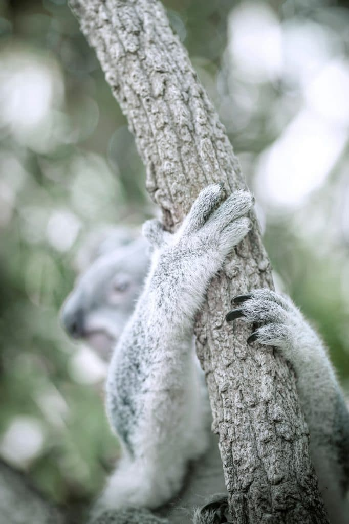 Koala voyage en famille