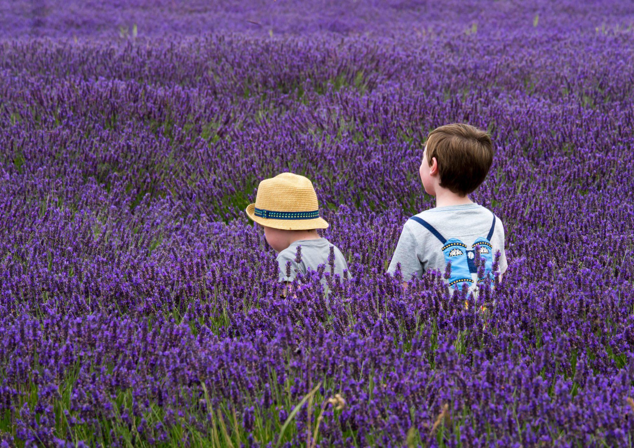 enfants dans champ de lavande en Provence vacances printemps 2020