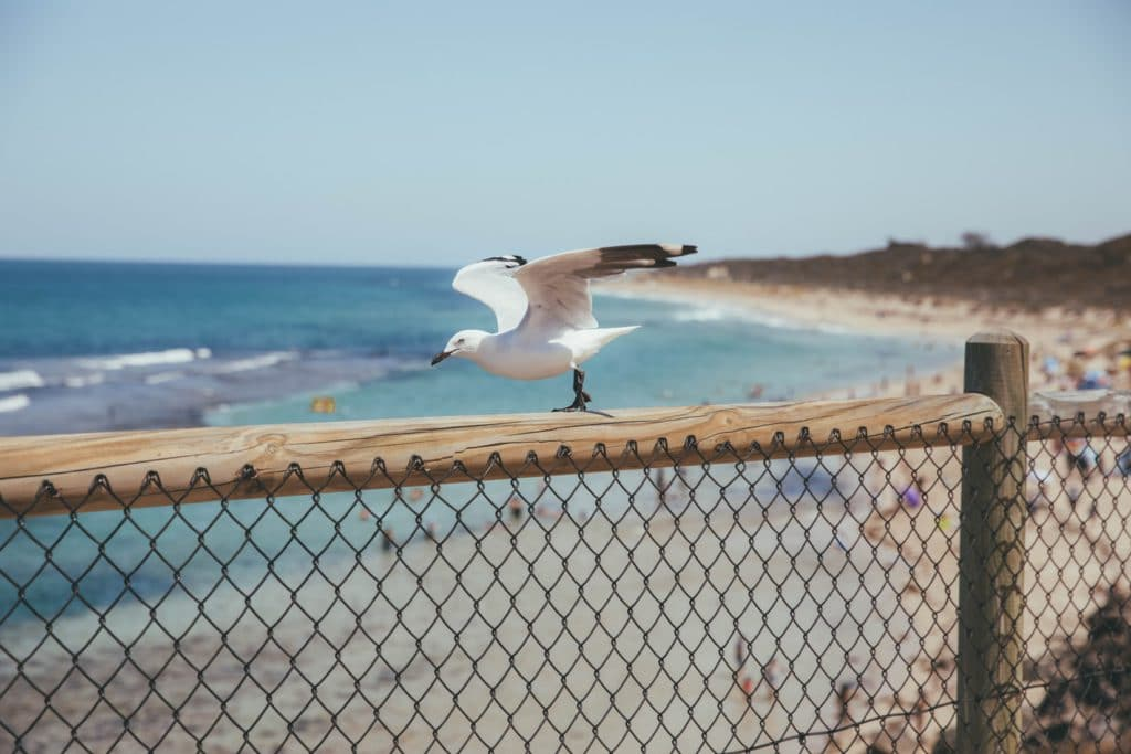 Mouette plage en Australie