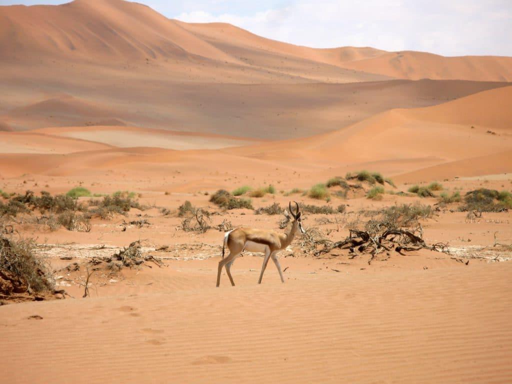 Animaux sauvages de Namibie à découvrir lors d'un voyage de noces