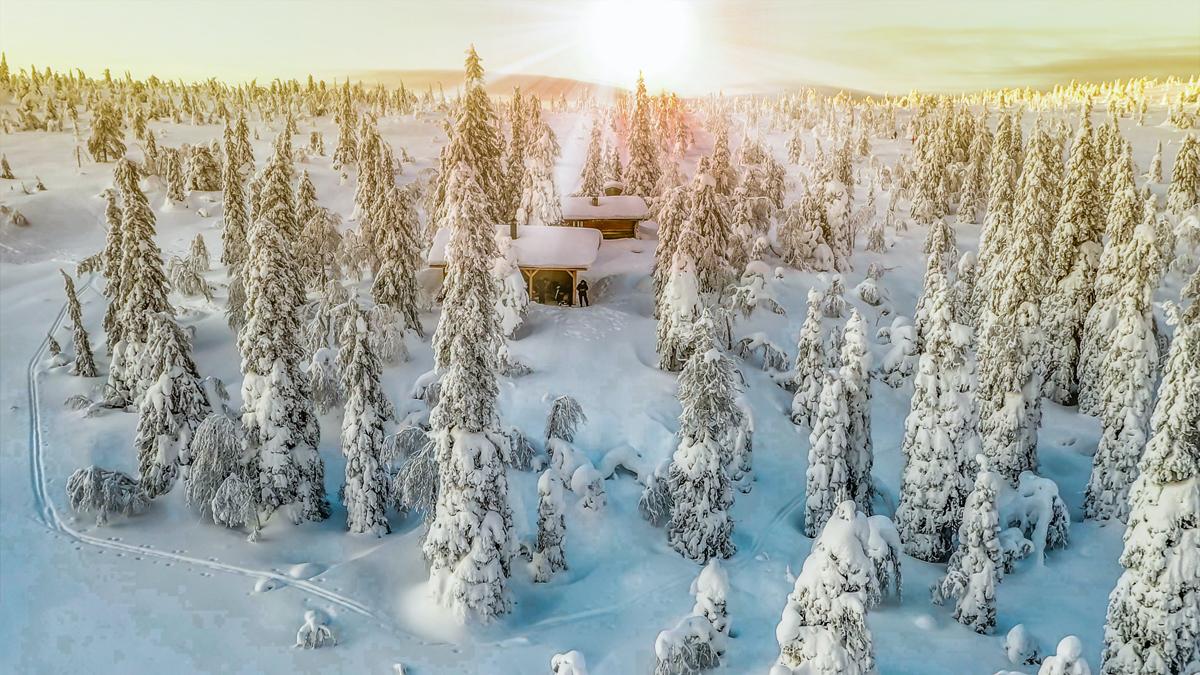 Foret et neige pour un Noel en Laponie
