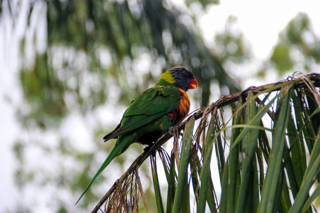 Oiseau parc de Brisbane