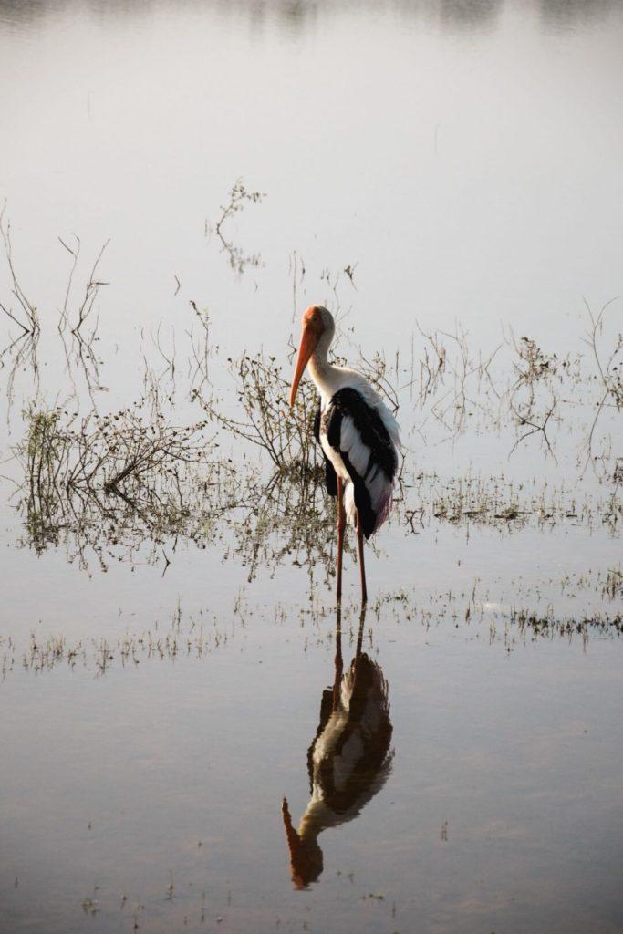 Oiseau au parc Uda Walawe