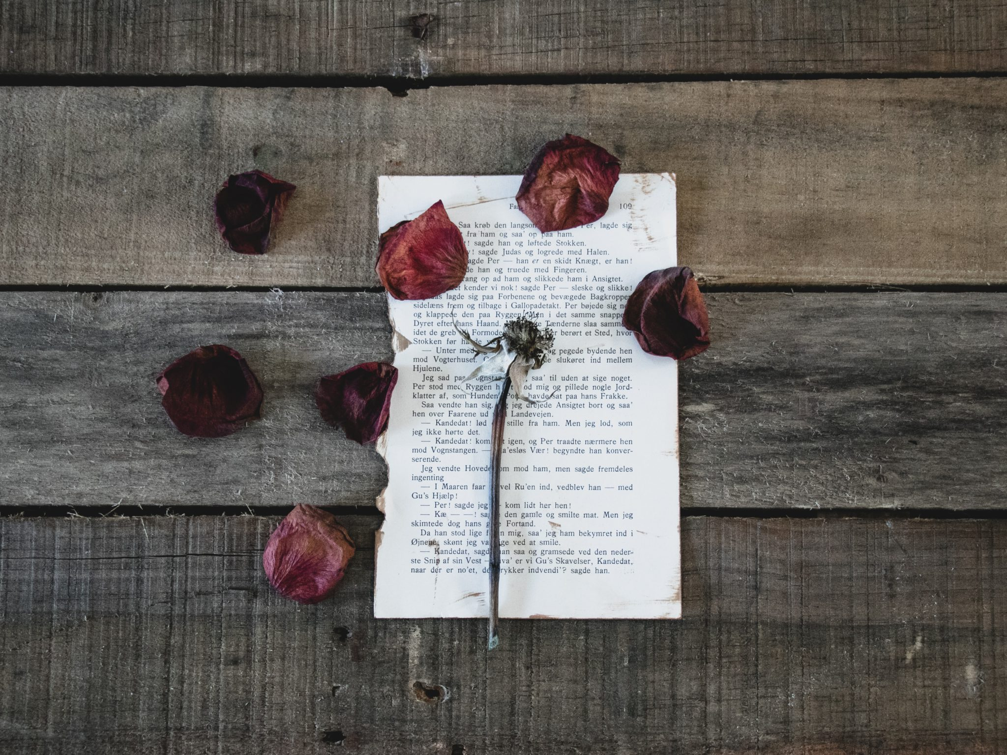 page de livre avec petales de rose seches