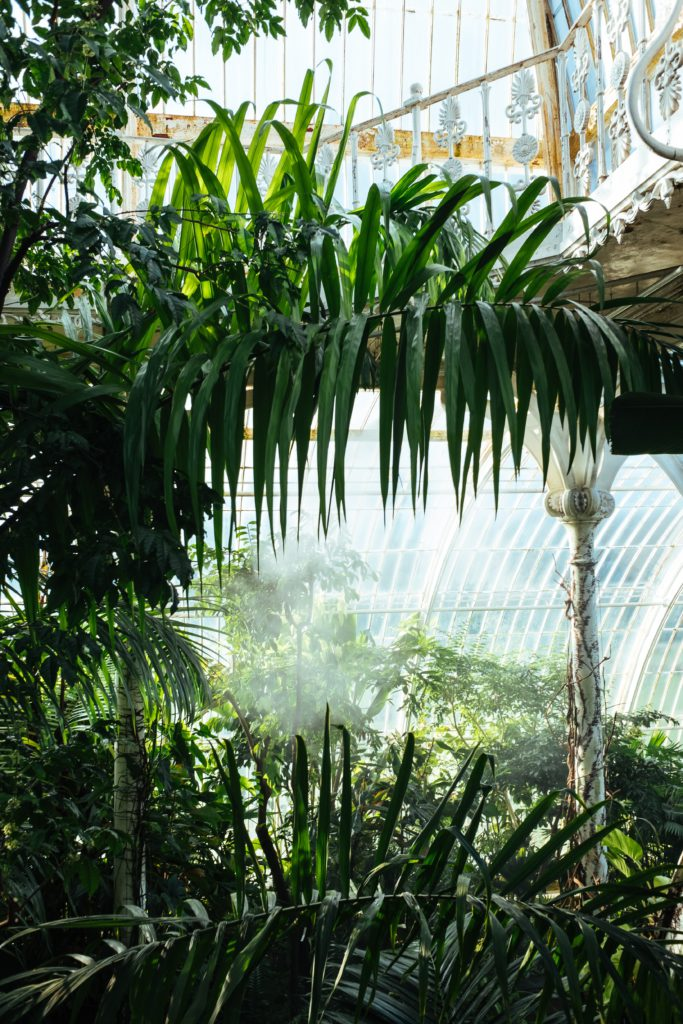 Palmiers a Kew Gardens