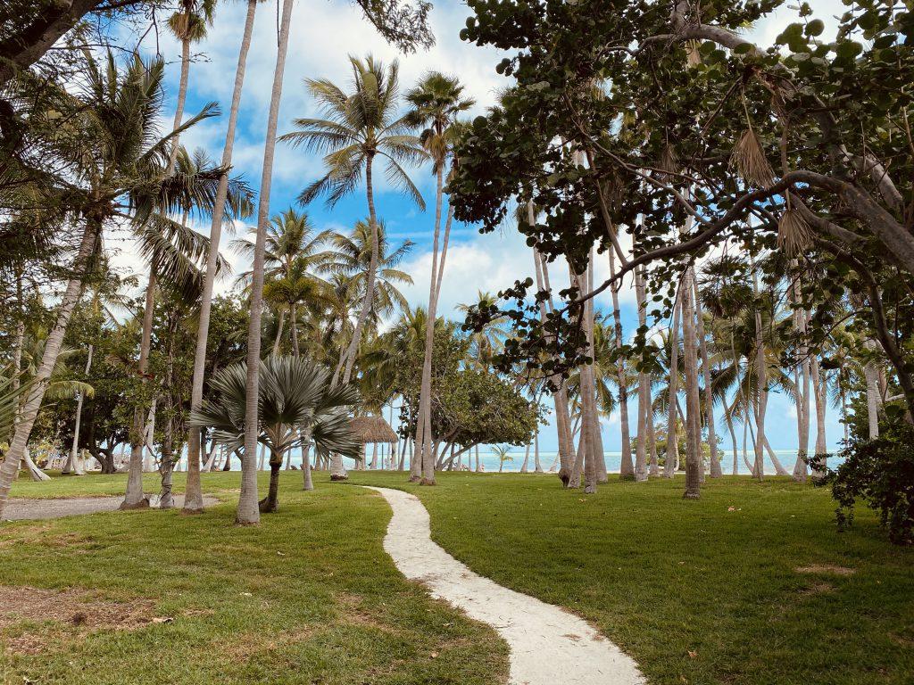 Palmiers dans les Keys a Miami