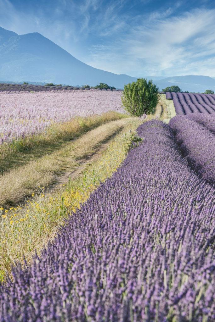 Plateau de Valensole paysage France