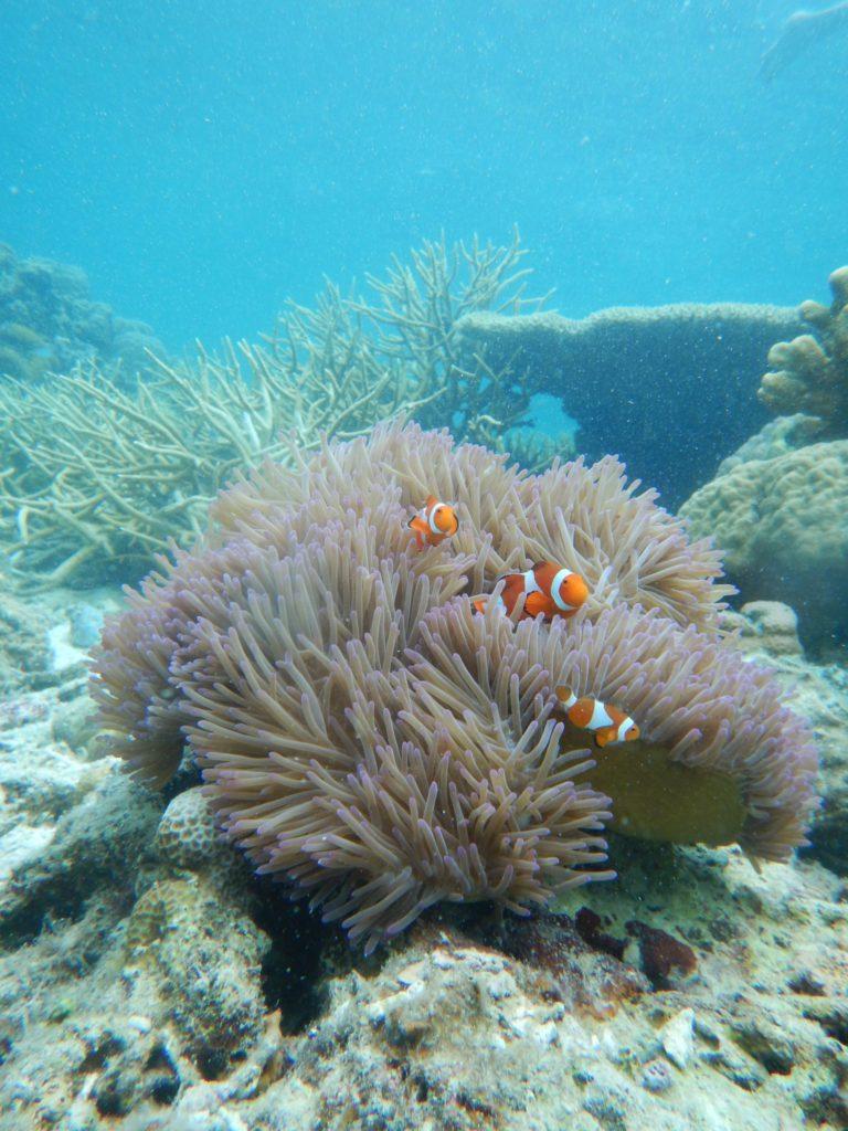 Plongee sous marine dans les coraux de Palawan aux Philippines