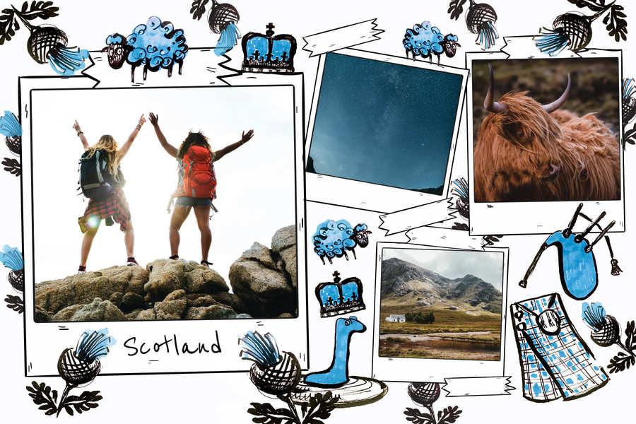 postcard-scotland-sheep