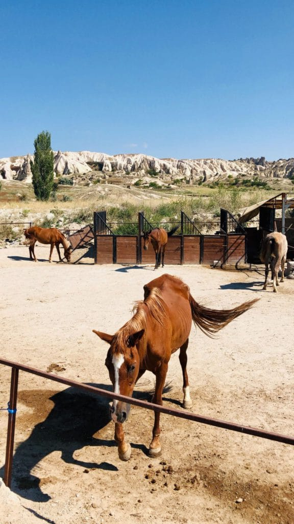 Cheval à Rose Valley, en Cappadoce