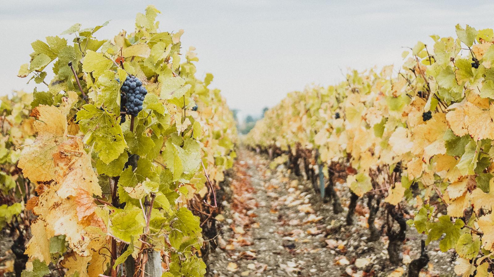 Route des vins de Bourgogne de Beaune à Santenay