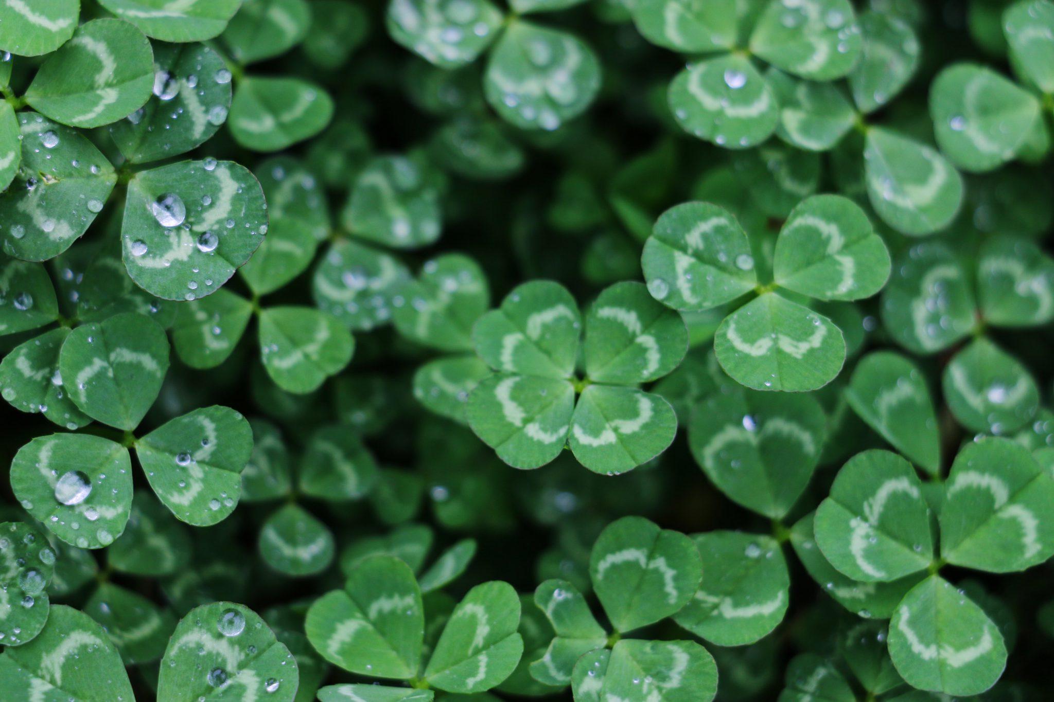 Les 5 meilleurs spots pour fêter la Saint-Patrick en Irlande