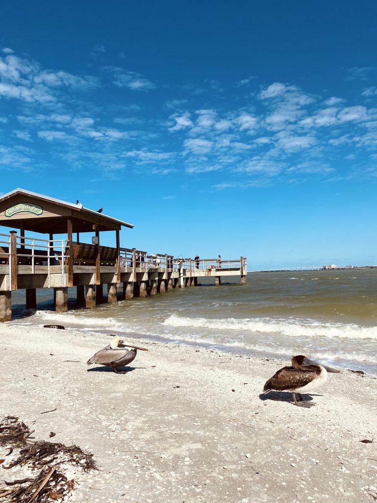 Plage et oiseaux a Sanibel et Captiva Floride