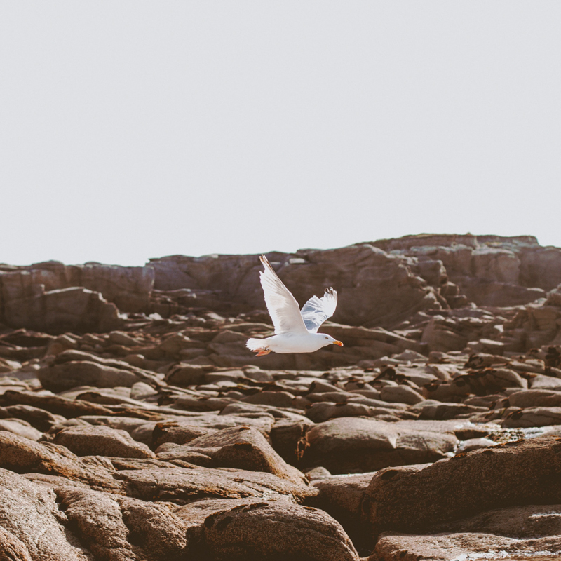 the-bird-island-arcachon