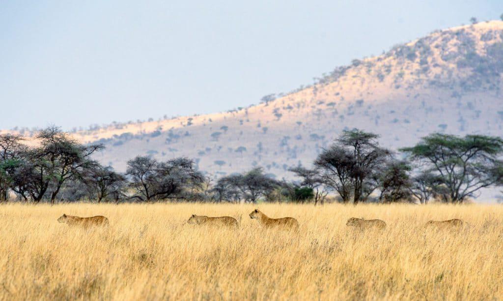 Paysages de Tanzanie en automne
