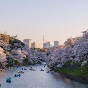 sakura le long dune riviere a Tokyo Japon pendant le printemps