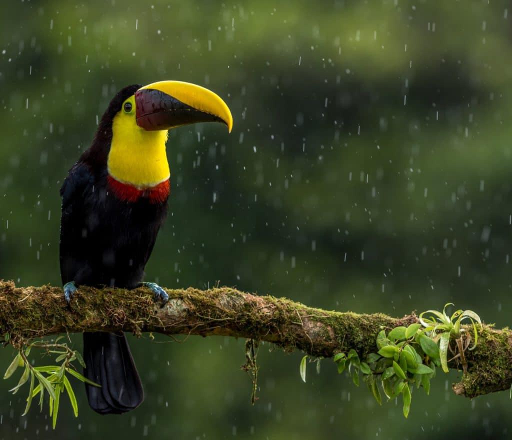 Touca du Costa Rica