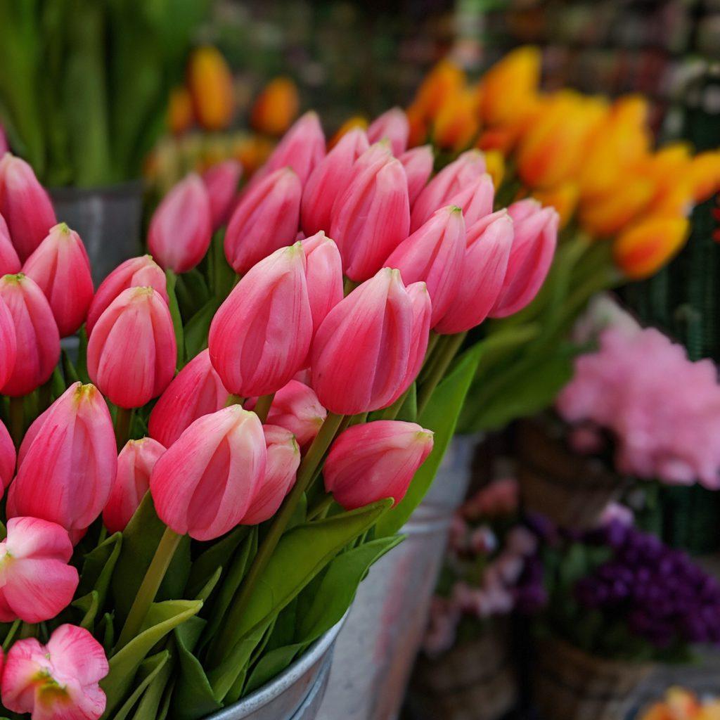 Tulipes de Keukenhof au marche flottant Amsterdam