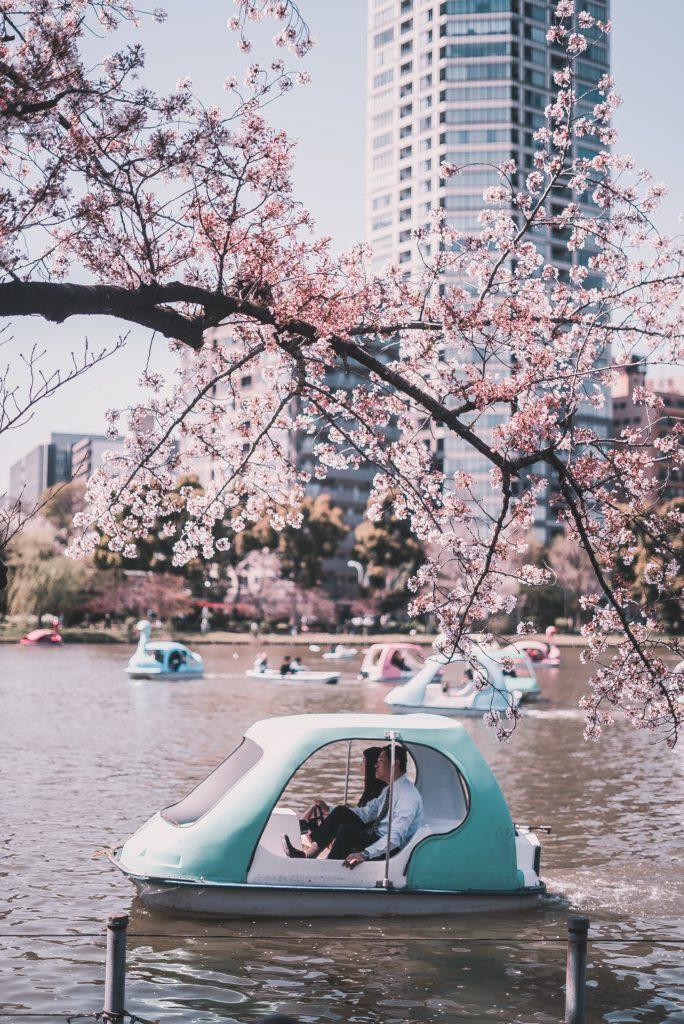 Lac du parc Ueno a Tokyo Japon avec cerisiers en fleurs
