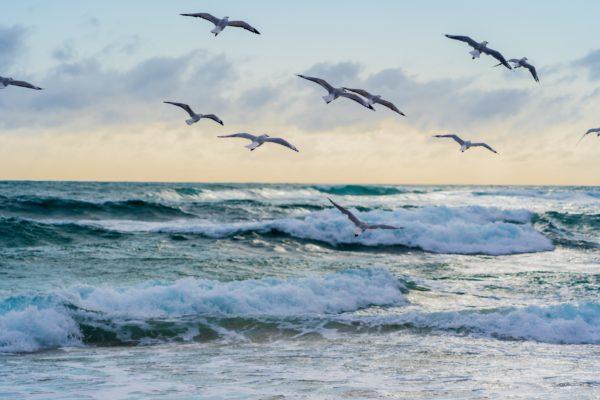 volee d'oiseaux au-dessus des vagues